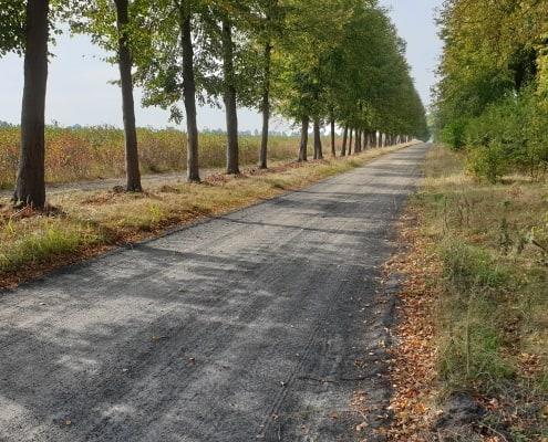 zdjęcie aleja drzew ocena oddziaływania na środowisko