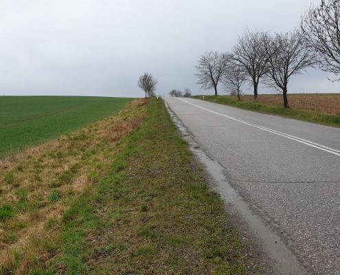 zdjęcie droga pośród pól wzdłuż drogi rosną drzewa inwentaryzacja przyrodnicza