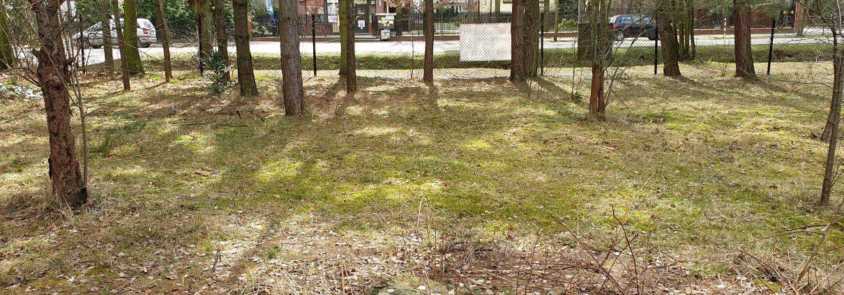 zdjęcie drzewa w ogrodzie inwentaryzacja zieleni