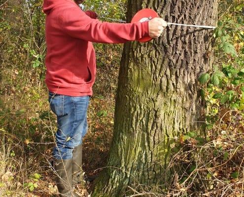 zdjęcie pomiar drzewa inwentaryzacja zieleni