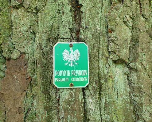 zdjęcie tabliczki pomnik przyrody na drzewie waloryzacja przyrodnicza