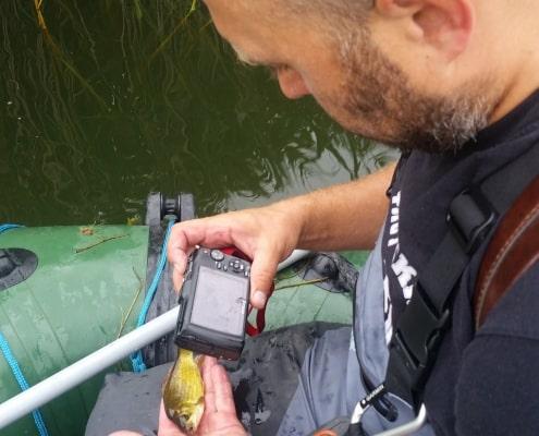ichtiolog fotografuje rybę