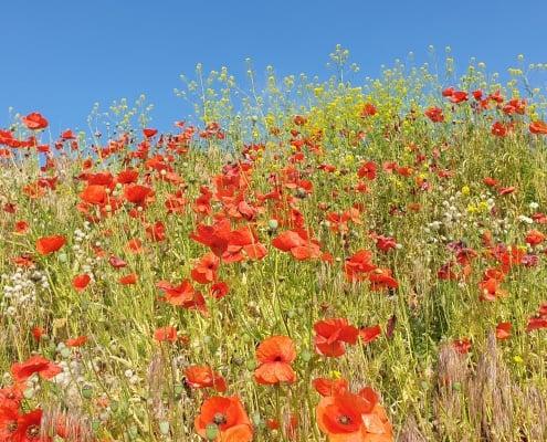 zdjęcie kwitnącej łąki na drugim planie błękitne niebo
