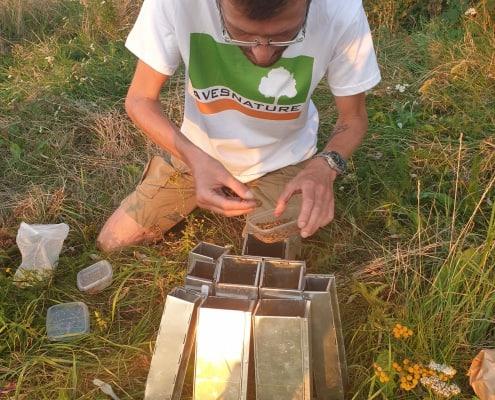 teriolog instaluje pułapki żywołowne