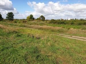 droga biegnie ukośnie przez środek łąki inwentaryzacja przyrodnicza