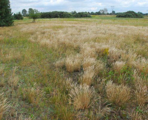 zdjęcie łąki zadrzewienia na drugim planie inwentaryzacja przyrodnicza