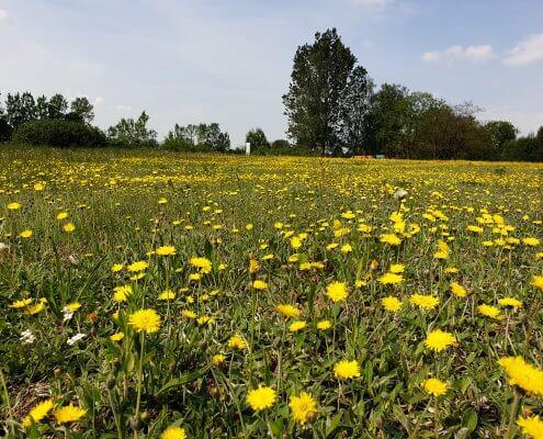 zdjęcie łąki inwentaryzacja przyrodnicza