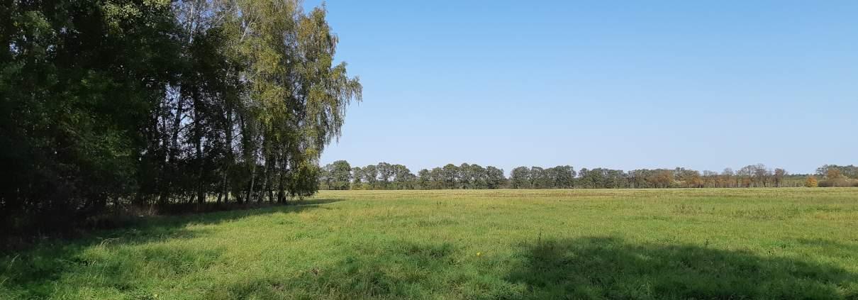 zdjęcie łąki oraz zadrzewienia inwentaryzacja zieleni