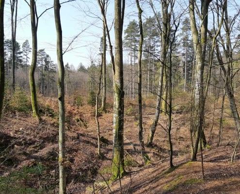 las w sąsiedztwie linii elektroenergetycznej inwentaryzacja przyrodnicza