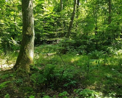 zdjęcie lasu ekspertyza ornitologiczna