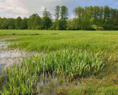 zdjęcie podmokłej łąki na skraju lasu inwentaryzacja przyrodnicza