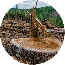 Ocena śladu ekologicznego - ograniczenie nadmiernej eksploatacji zasobów