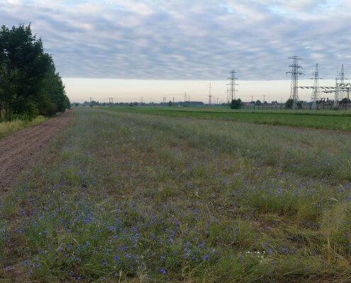 zdjęcie pola stacja elektroenergetyczna w tle inwentaryzacja zieleni