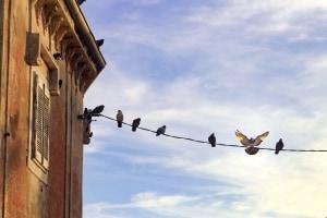 Ptaki przesiadujące na linie energetycznej