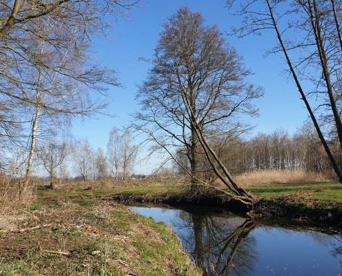 zdjęcie rzeki płynącej pośród łąk i zadrzewień inwentaryzacja przyrodnicza