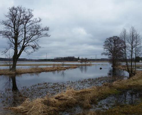 zdjęcie rozlewiska rzeki Omulwi inwentaryzacja przyrodnicza