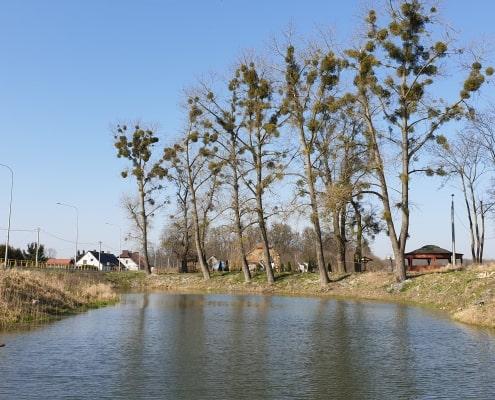 zdjęcie staw wiejski otoczony drzewami oraz zabudową mieszalną inwentaryzacja przyrodnicza